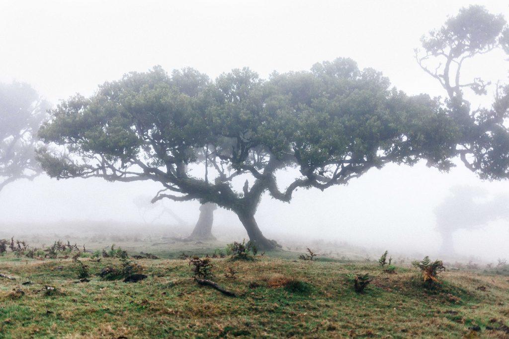 arbre madère