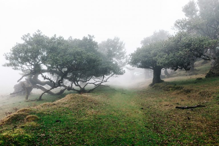 forêt brume Madère
