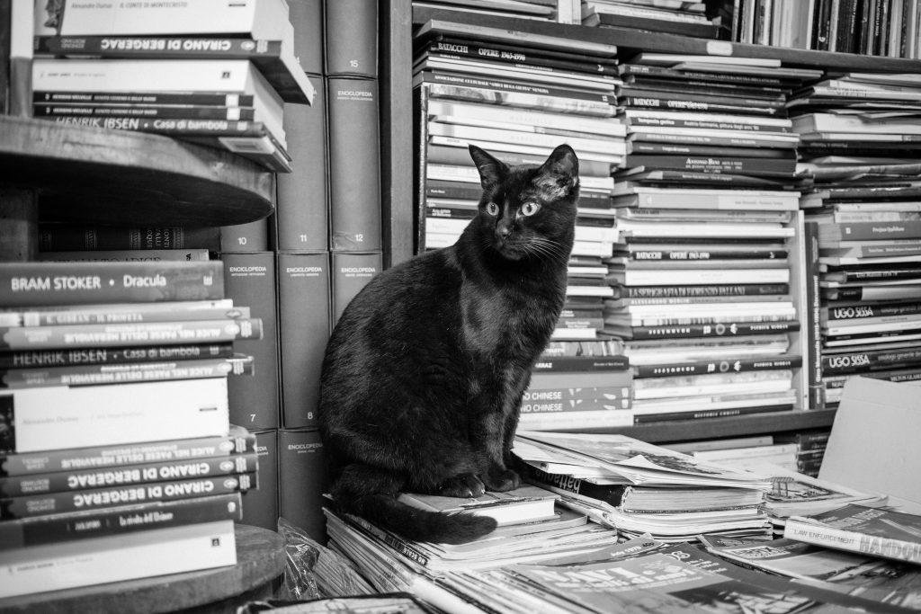 chat librairie alta acqua