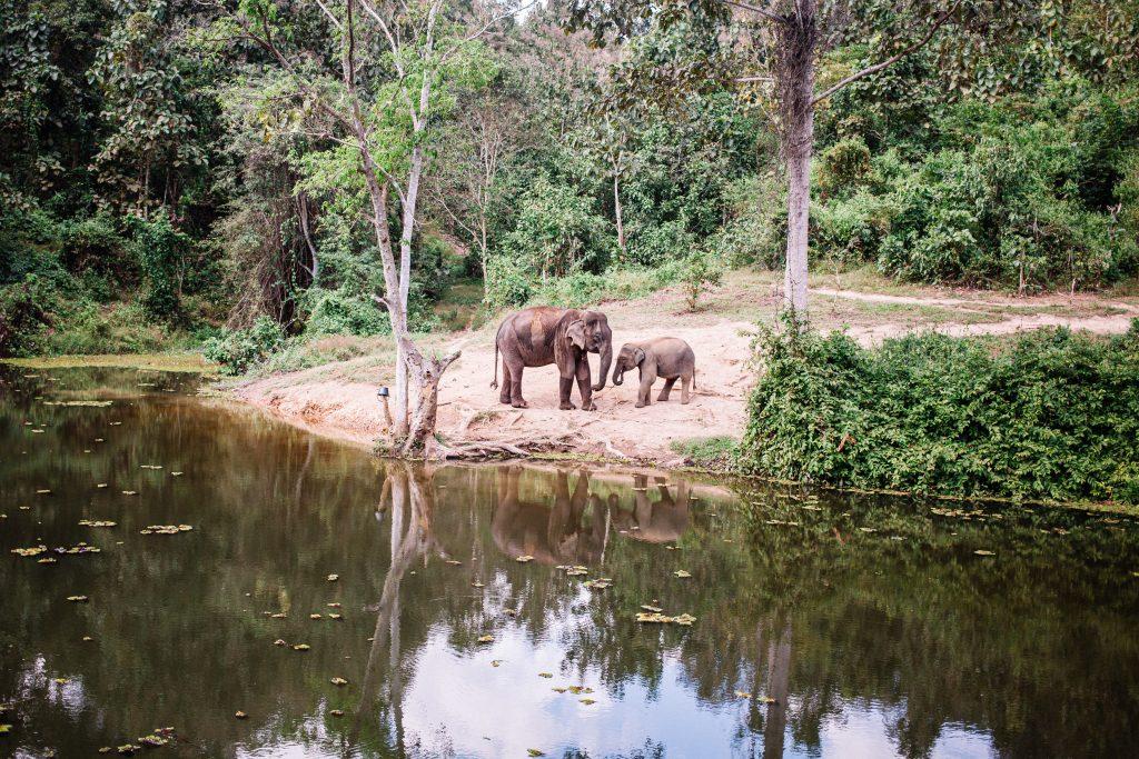 élephant du laos