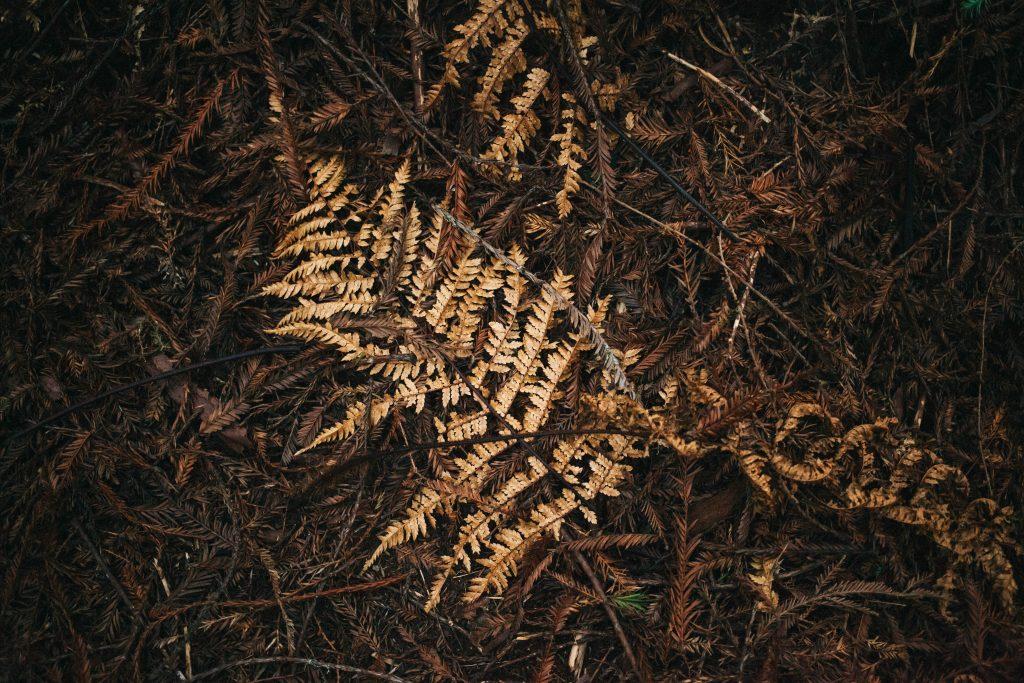 forêt de Whakarewarewa
