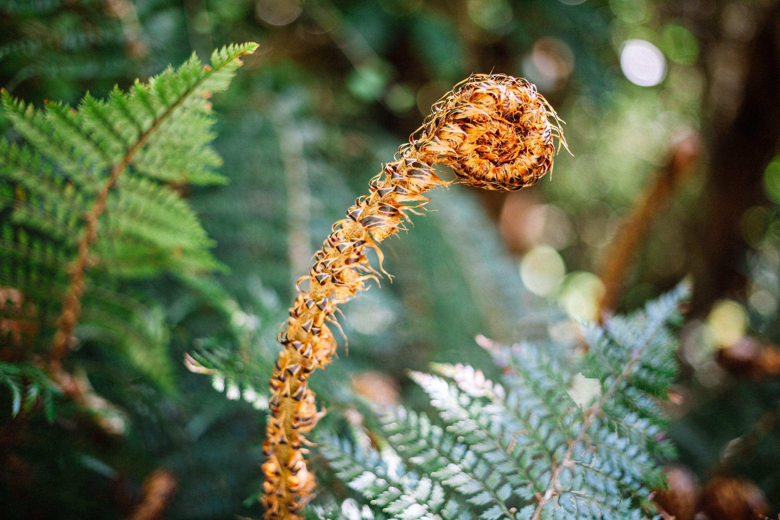 les forêts de Nouvelle Zélande